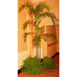 Adonidia Palm Trees