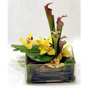 Sarracenia Lilies and Cymbidium Orchids - PF37